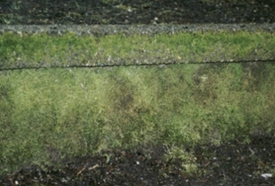 how to clean moss off concrete tile roof