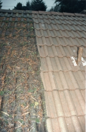 Tile Roof Cleaning Example Of Extreme Differences.